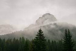 Berggipfel im Nebel mit Tannen im Vordergrund