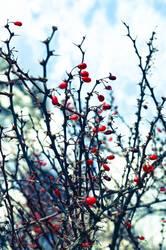 rote Farbkleckse im Winter...