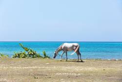 kubanische Pferdearbeitspause