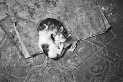 Katzenbabies auf der Strasse