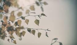 Der Winter tarnt sich gut als Herbst