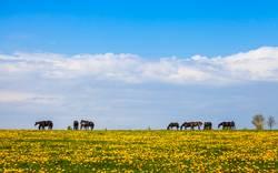 Pferde auf der Weide im Frühling