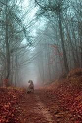 Herbstwald im Nebel