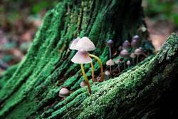 Pilze auf totem Holz