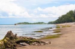 Getrocknete Baumwurzel am Strand