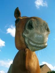 ein' vom pferd