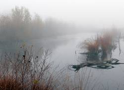 Nebel im Moor...