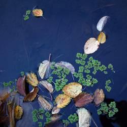 Herbst im Teich   UT HH 10/19