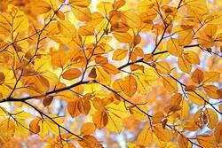 Helgiland II | goldener Herbst...