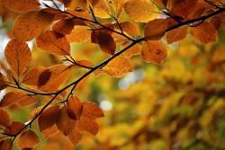 Verwandlung | Sommer- in Herbstfarben
