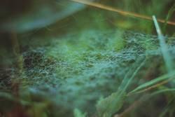 spinnennetz morgentau