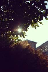 pflanze garten sonne