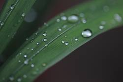 Tears of Nature......