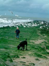 Kind und Hund beobachten Möwen
