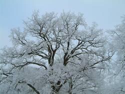 Vereister Baum horizontal