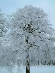 Vereister Baum vertikal