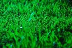 fresh, Grass, green