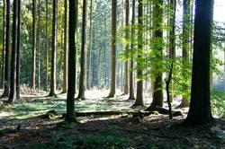 Lichtung im Wald