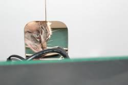 Katzenneugier