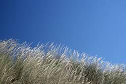 der wind liebt das gras