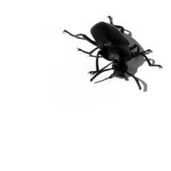 Mein bug, dein bug...