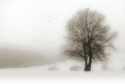 melancholisch - Nebelwinter.