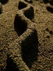 Sandwelle
