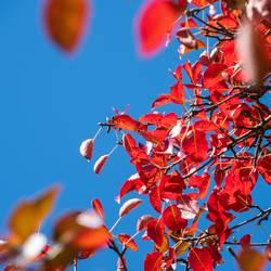 in der goldenen Herbsteszeit