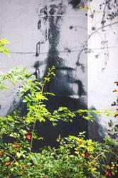 Schatten der Rosenkönigin