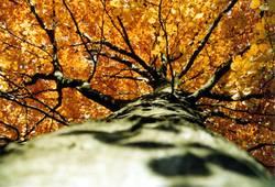 Herbststamm