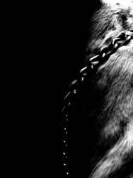 Dog Darkness