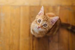 Kleine Katze, die auf dem Boden steht