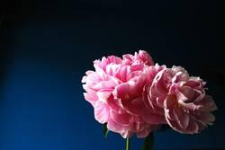 fresh flower 2