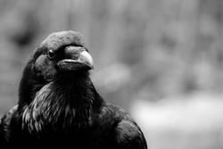 the crow 3/4