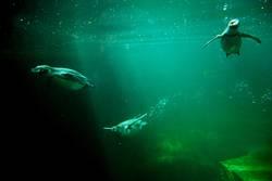 Schwimmflügel
