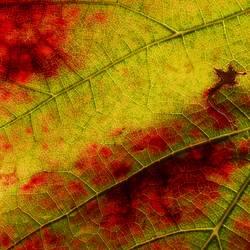 Herbstlicher Wein