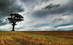 Lonesome Tree