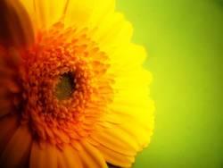 ..gelb..grün..Frühling!