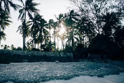 Zanzibar XII