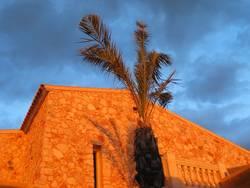 Landhaus mit Palme