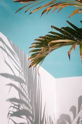 Palm leaves on turquoise sky and white wall
