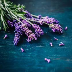 Lavendel auf rustikalem Hintergrund
