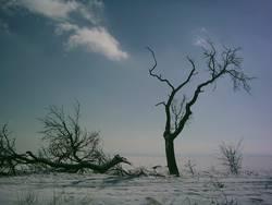Winterliche Einöde?