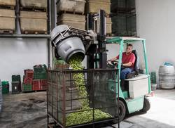 Olives worker at forklift