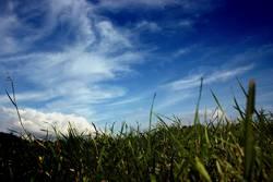 himmel und gras