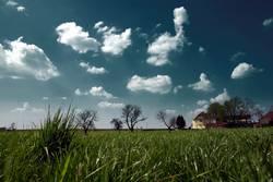 haus bäume gras