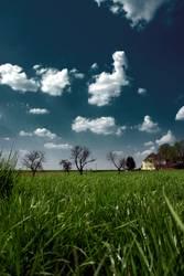 haus bäume gras hoch