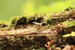 Momentaufnahme Fliege Wald