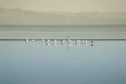 Vogelschwarm am Saltonsee