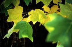 Herbstblätter #1